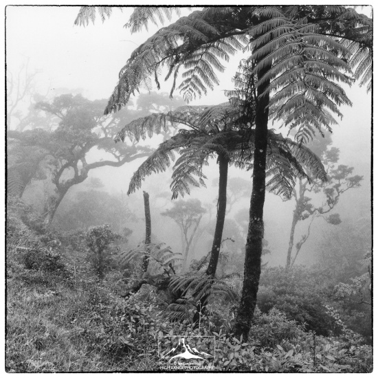 Horton_Plains_Tree_Ferns_On)Road#1(LOGO).jpg