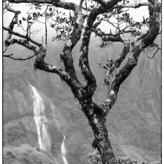 Cloud_Forest_Tree_Pan#1(B&W)(LOGO)(2_11).jpg