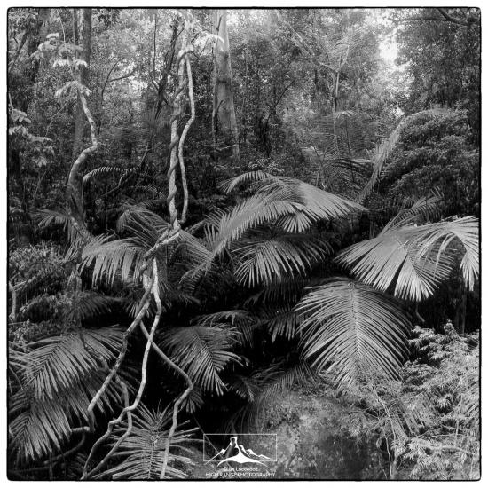 Cane_Forest_KMTR_(LOGO)(06_02).jpg