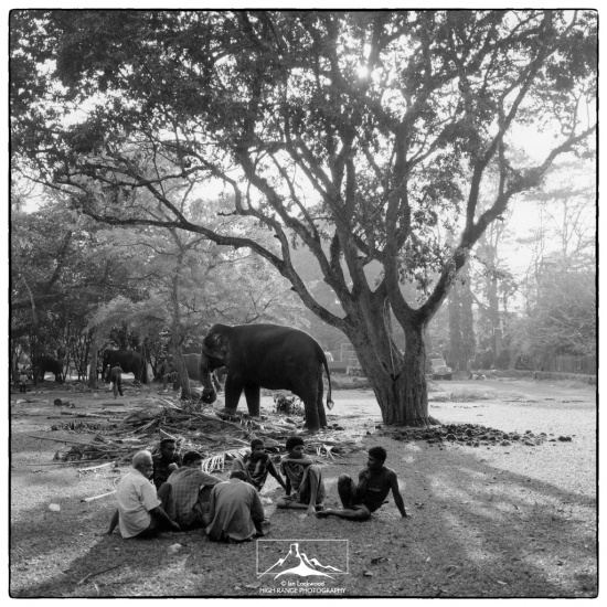 Viramahadevi_Park_Elephants#1(1_06)(LOGO).jpg