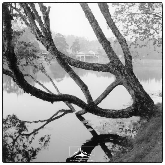 (4) KodaiLake&Tree(6_2005)#1a(LOGO).jpg